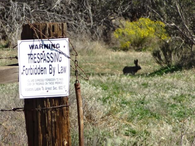No Trespassing and Rabbit