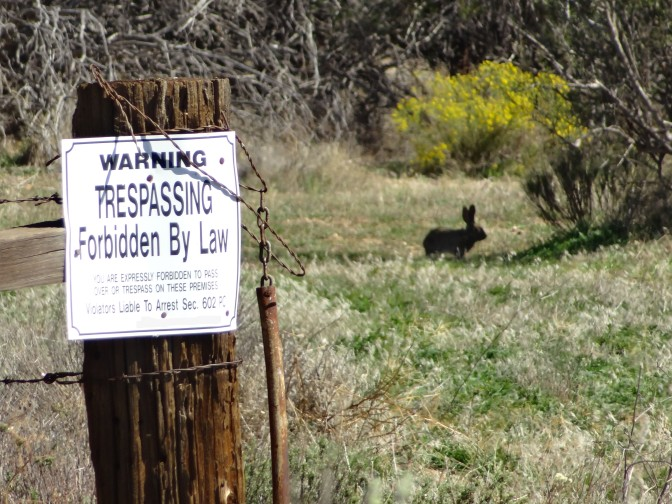 No Trespassing and Rabbit