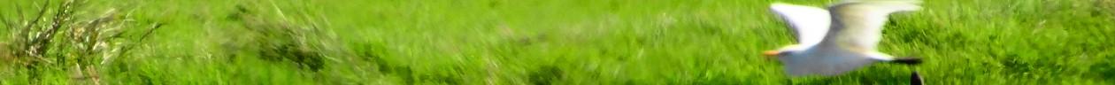 Verde Holistico