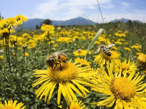 honey-bees-upper-bavaria-germany.jpg