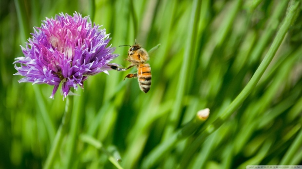 little-honey-bee_00438289