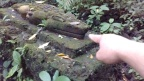Crocodiles and the jungle